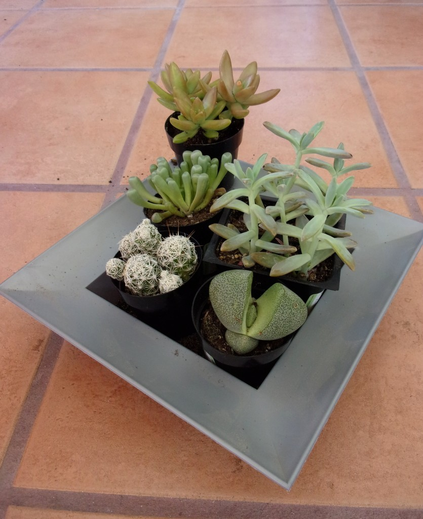 Succulents are perfect for small spaces and absentminded gardeners - all they need is sun and a little water.