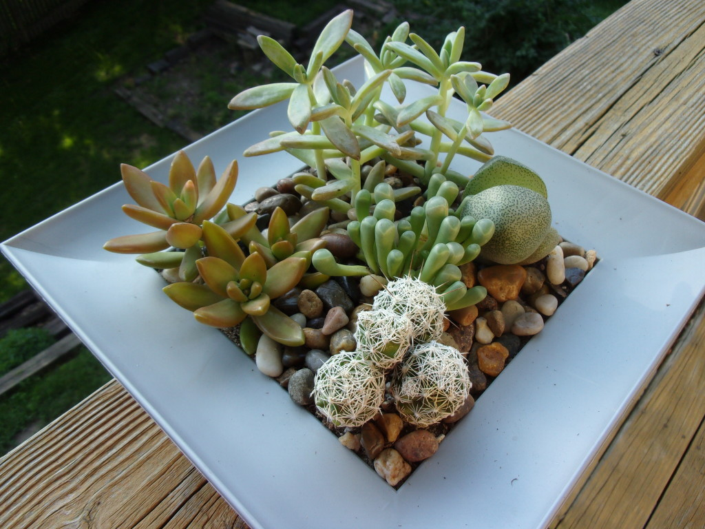 Succulents are perfect for small spaces and absentminded gardeners - and you can make one for $15.